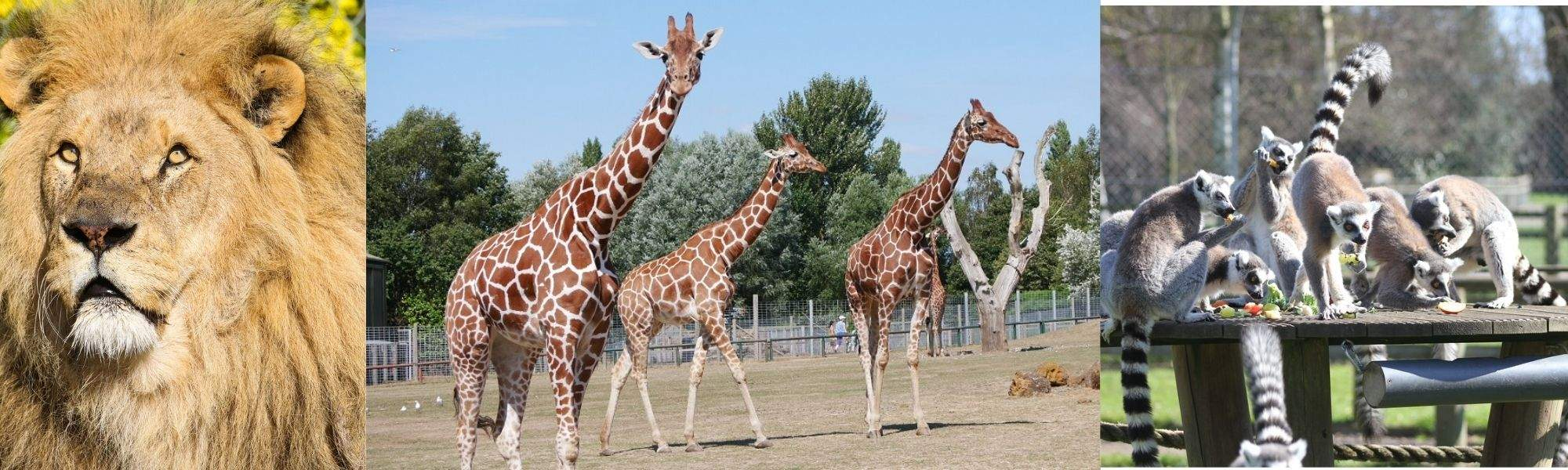 Sport, Leisure & Hobbies FAMILY PASS MEMBERS ONLY: Africa Alive Entry Tickets, 20% off